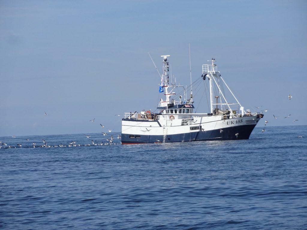 diese Fischer gilt es zu beobachten - sie ändern manchmal völlig überraschen ihre Fahrtrichtung :-(