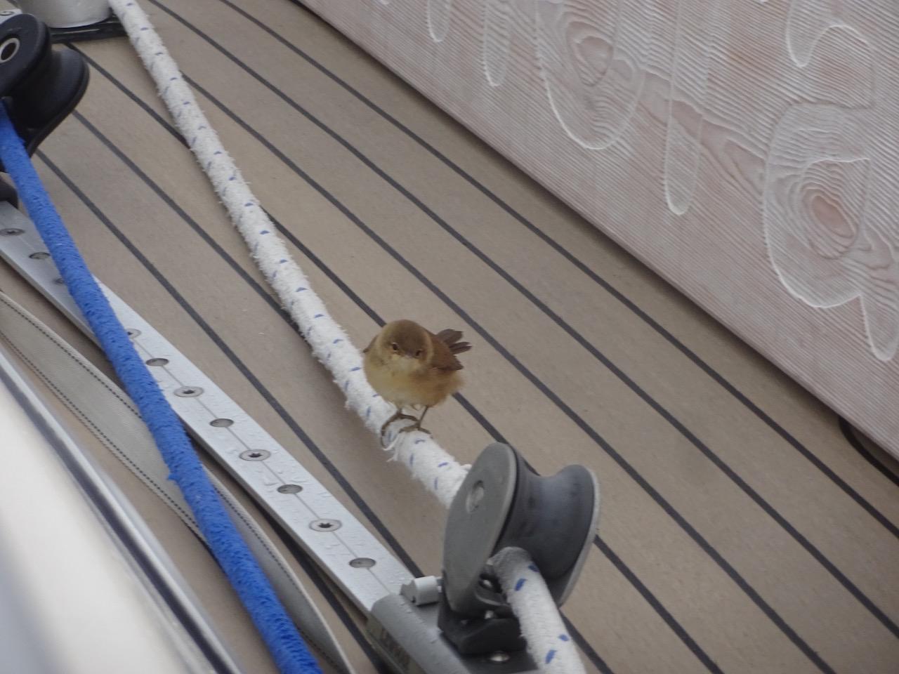 ein gefiederter Besucher an Bord