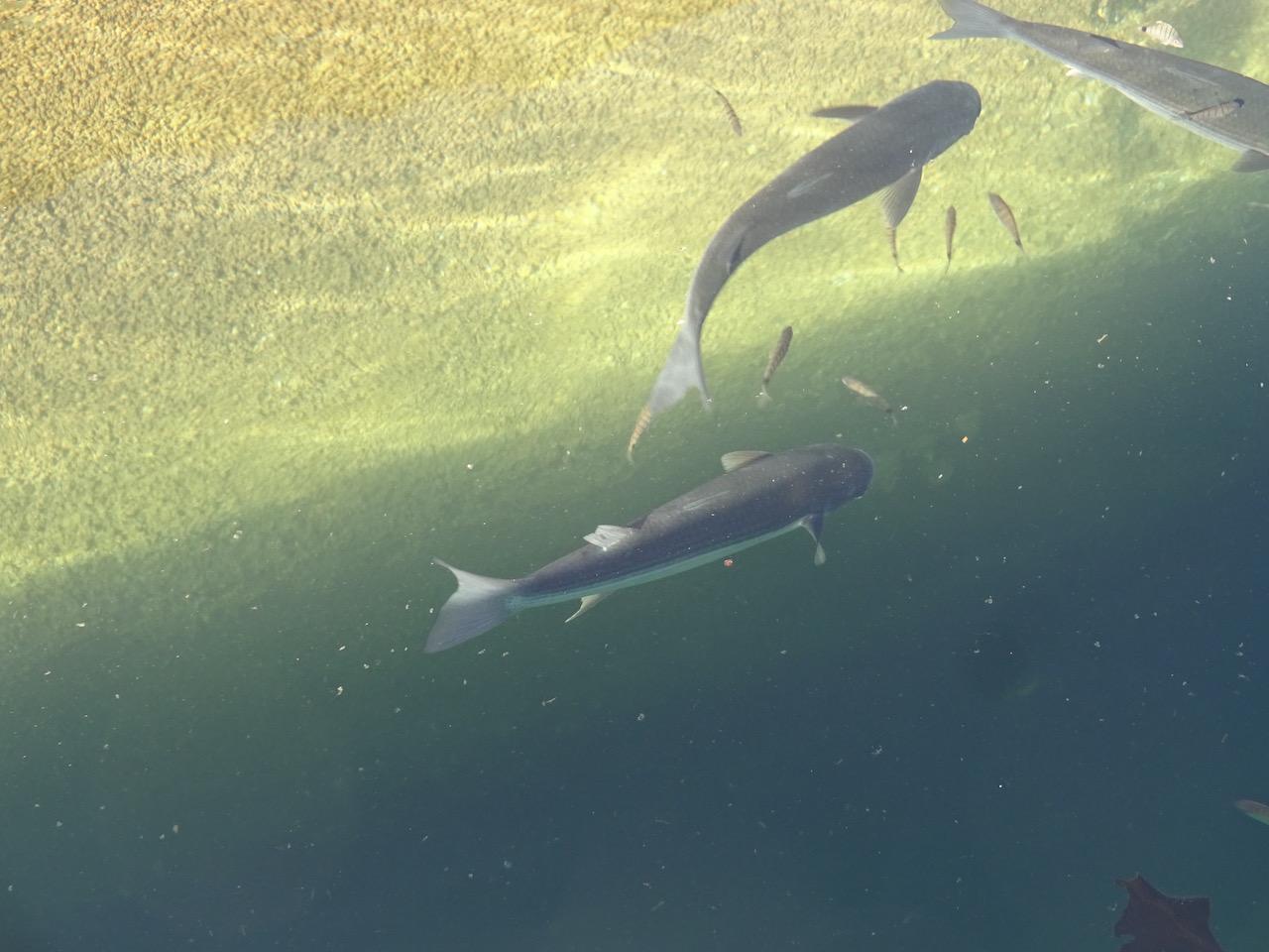 und Fische im glasklaren Wasser