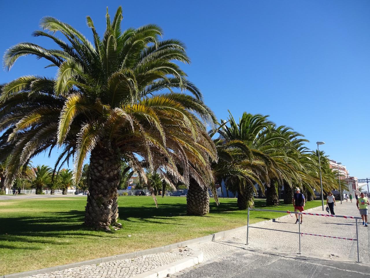 Palmen am Ufer des Tajo