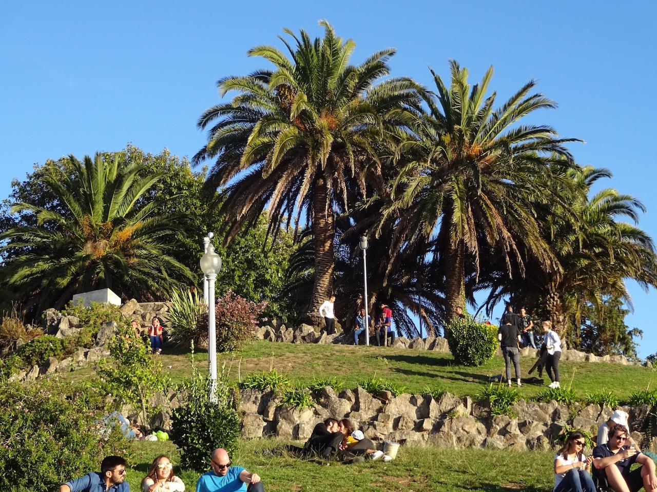 Palmen im Park