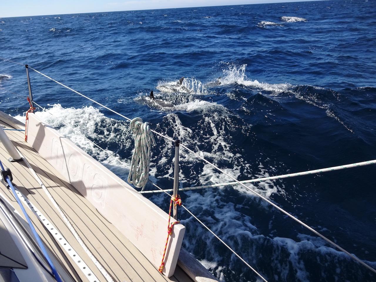 immer wieder gern gesehen - Besuch von Delfinen