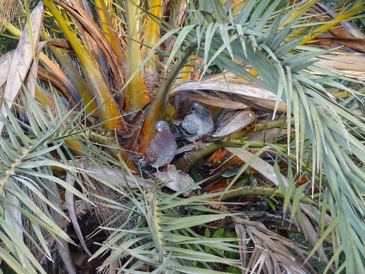 Bewohner einer Palme