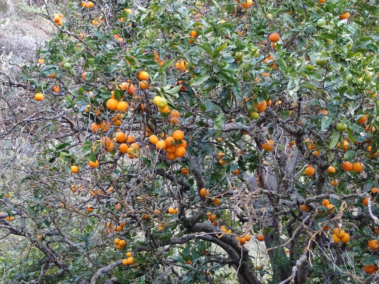 die Mandarinen waren zu weit entfernt