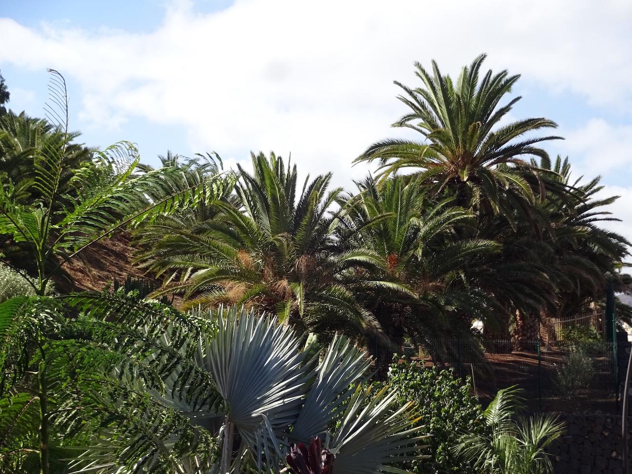 Blick auf den Palmengarten