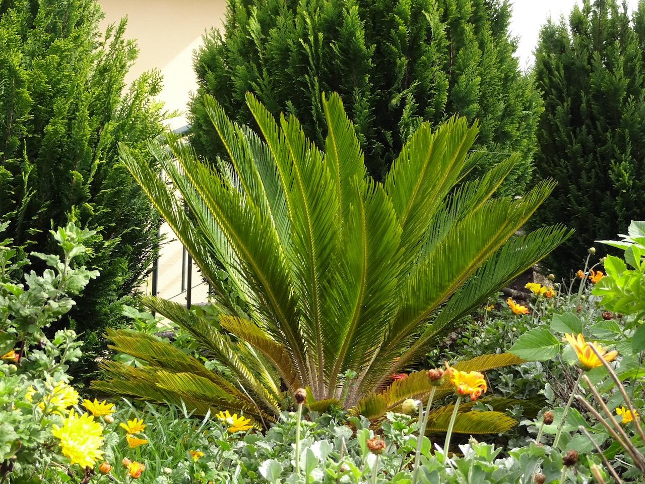 Gartenpflanze auf Madeira