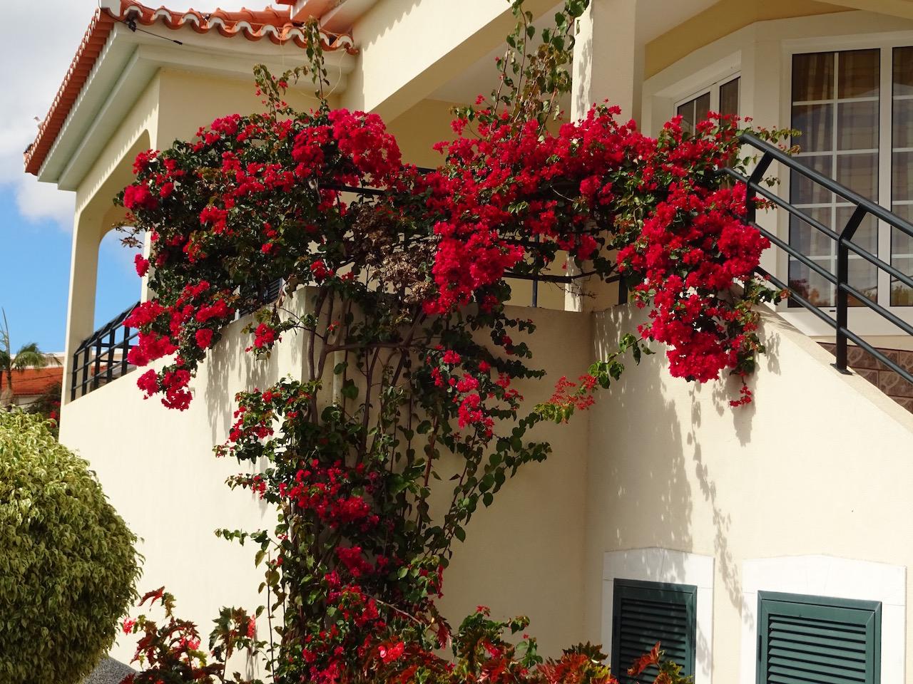 Madeira, zu recht auch die Blumeninsel genannt